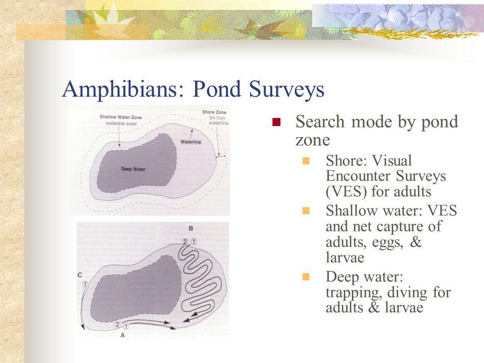 Amphibians: Pond Surveys Aquatic traps Galvanized minnow trap Collapsible net trap Pop bottle trap Pond surveys yield CPUE estimates