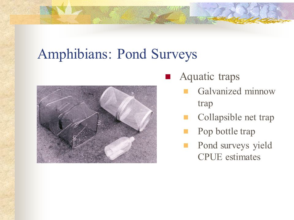 Amphibians: Pond Surveys Aquatic traps Galvanized minnow trap Collapsible net trap Pop bottle trap Pond surveys yield CPUE estimates