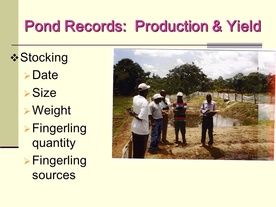 Pond Records: Production & Yield  Harvest  Date  Size  Weight  Number of fingerlings  Mortality  Growth  Yield