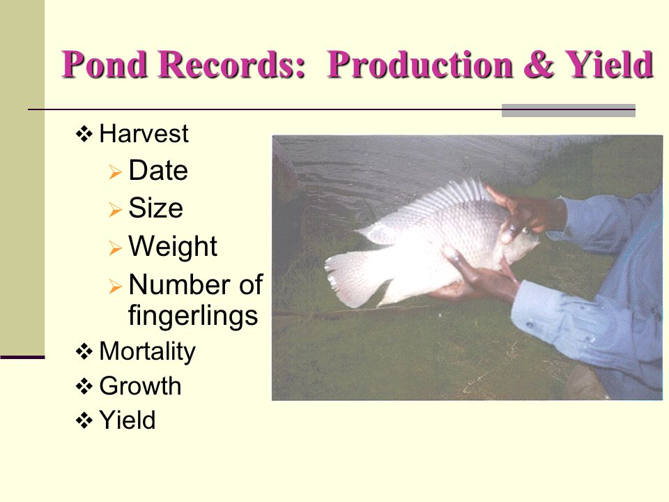 Pond Records: Feeding, Other Supplies  Type of feed  Daily feeding  Total feeding  Type of fertilizer  Date, quantity, type
