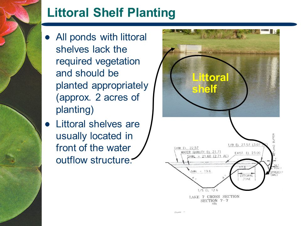 Littoral Shelf Planting All ponds with littoral shelves lack the required vegetation and should be planted appropriately (approx.