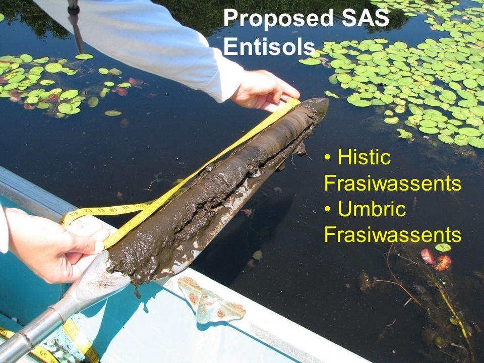 Histic Frasiwassents Umbric Frasiwassents Proposed SAS Entisols