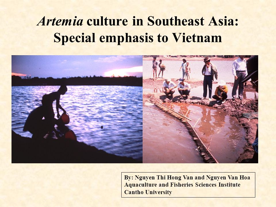 Artemia culture in Southeast Asia: Special emphasis to Vietnam By: Nguyen Thi Hong Van and Nguyen Van Hoa Aquaculture and Fisheries Sciences Institute