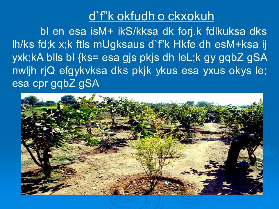 """bl en esa isM+ ikS/kksa dk forj.k fdlkuksa dks lh/ks fd;k x;k ftls mUgksaus d`f""""k Hkfe dh esM+ksa ij yxk;kA blls bl {ks= esa gjs pkjs dh leL;k gy gqbZ"""