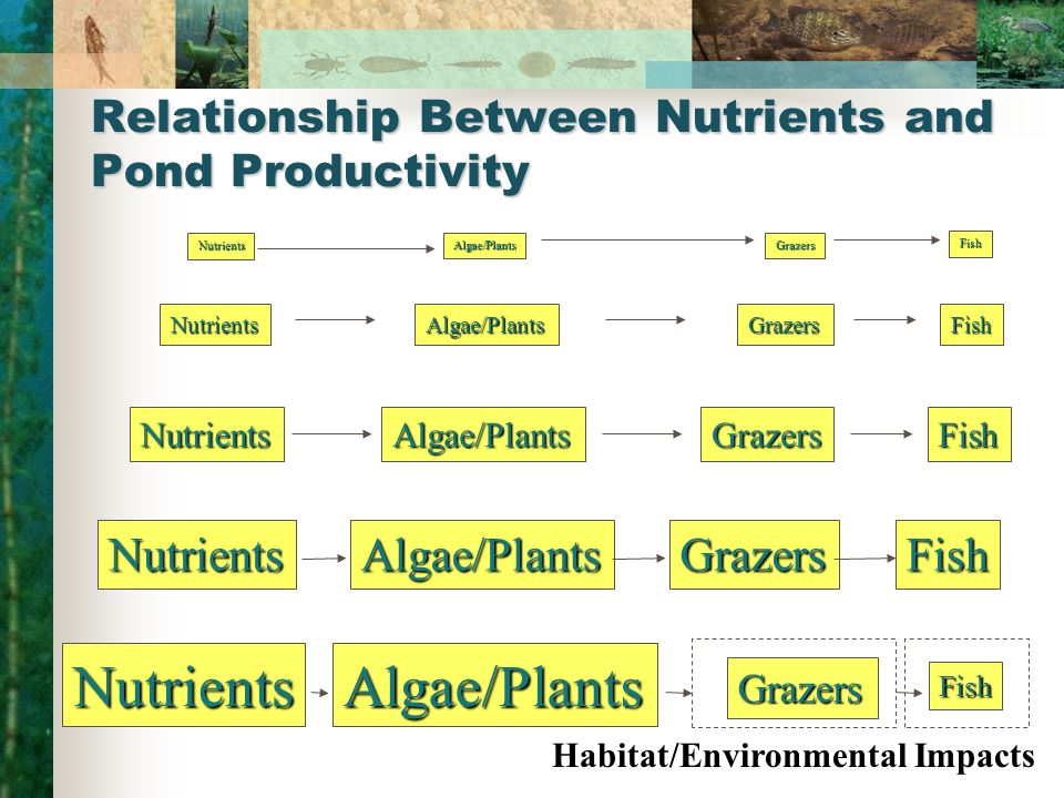 Relationship Between Nutrients and Pond Productivity NutrientsAlgae/PlantsGrazersFish Nutrients Algae/PlantsGrazersFish Nutrients Algae/PlantsGrazers Fish Nutrients Algae/PlantsGrazersFish Nutrients Habitat/Environmental Impacts Algae/Plants Grazers Fish