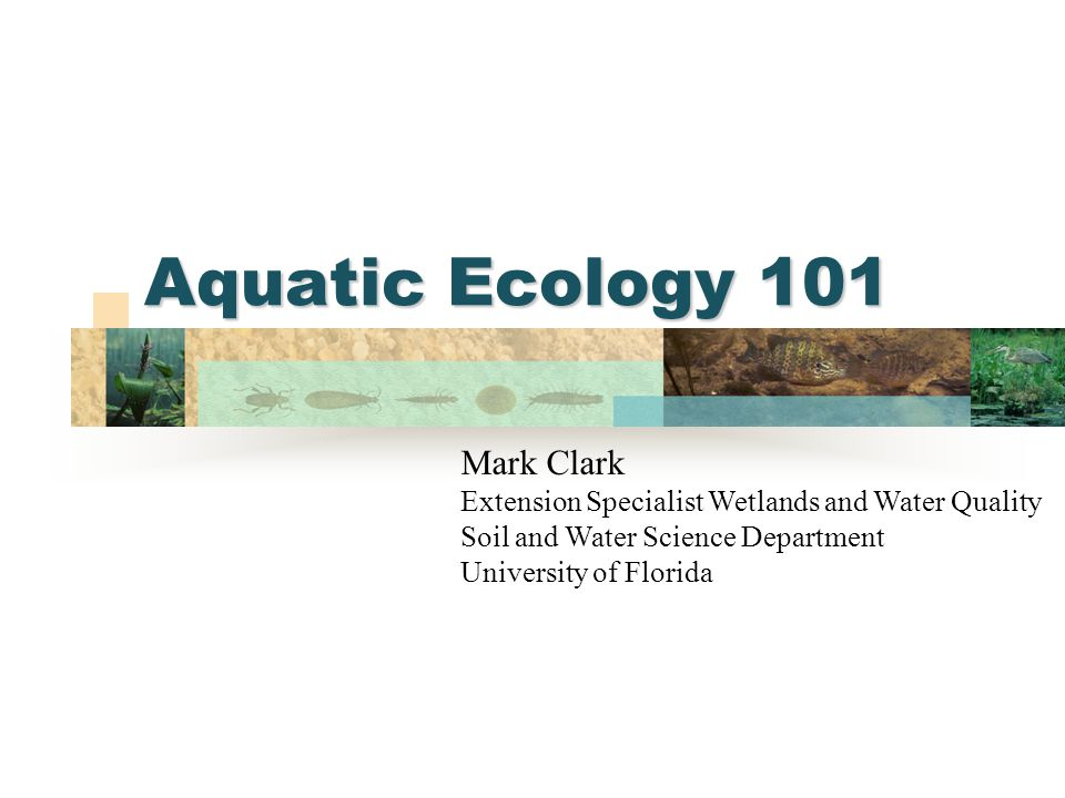 Aquatic Ecology 101 Mark Clark Extension Specialist Wetlands and Water Quality Soil and Water Science Department University of Florida