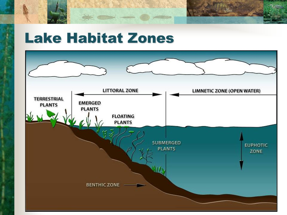 Lake Habitat Zones