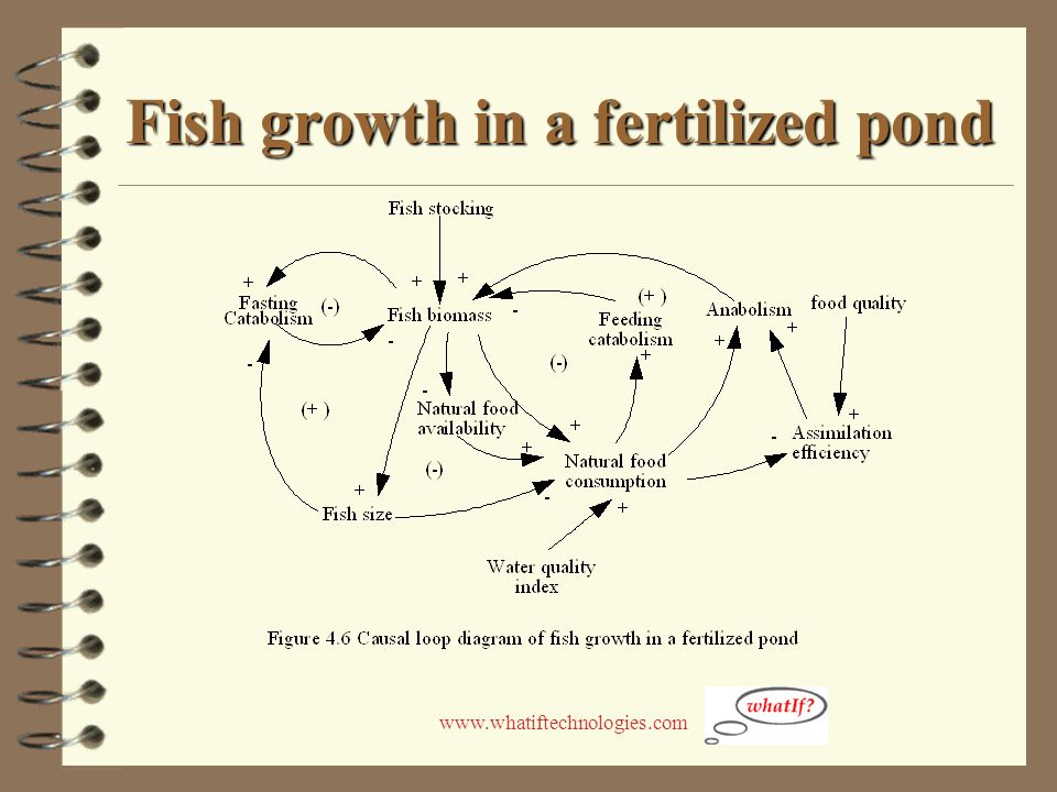 www.whatiftechnologies.com Fish growth in a fertilized pond