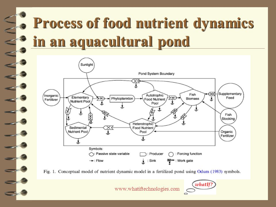 www.whatiftechnologies.com Process of food nutrient dynamics in an aquacultural pond