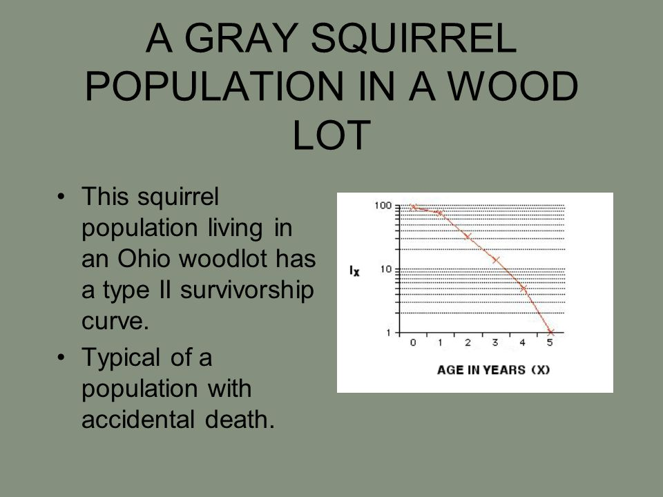 A GRAY SQUIRREL POPULATION IN A WOOD LOT This squirrel population living in an Ohio woodlot has a type II survivorship curve. Typical of a population