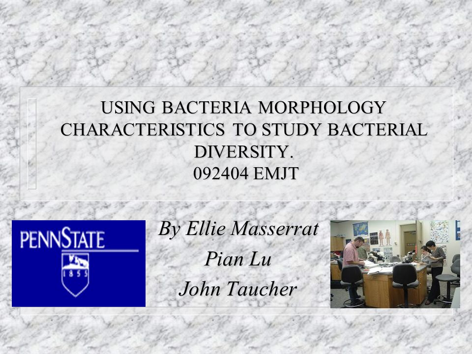 By Ellie Masserrat Pian Lu John Taucher USING BACTERIA MORPHOLOGY CHARACTERISTICS TO STUDY BACTERIAL DIVERSITY.