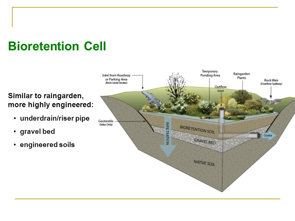 Bioretention Cell Similar to raingarden, more highly engineered: underdrain/riser pipe gravel bed engineered soils