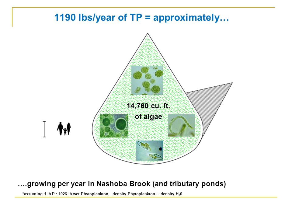 1190 lbs/year of TP = approximately… ….growing per year in Nashoba Brook (and tributary ponds) *assuming 1 lb P : 1026 lb wet Phytoplankton, density Phytoplankton ~ density H 2 0 14,760 cu.