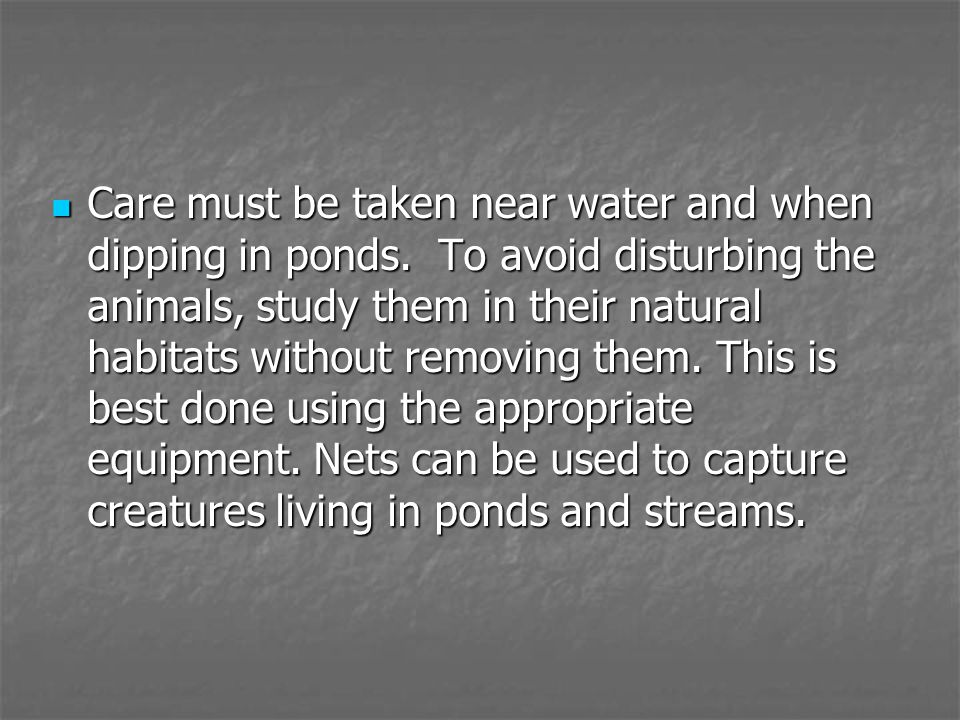 Care must be taken near water and when dipping in ponds. To avoid disturbing the animals, study them in their natural habitats without removing them.
