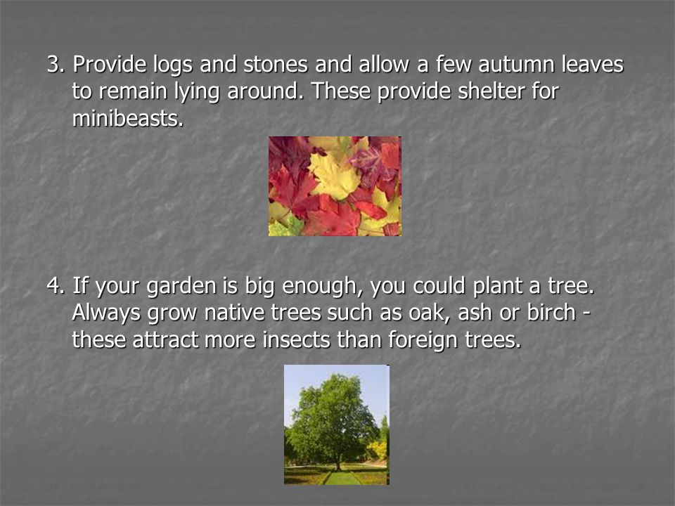 3. Provide logs and stones and allow a few autumn leaves to remain lying around. These provide shelter for minibeasts. 4. If your garden is big enough