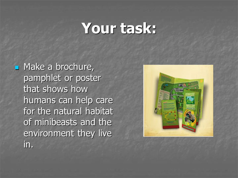 Your task: Make a brochure, pamphlet or poster that shows how humans can help care for the natural habitat of minibeasts and the environment they live