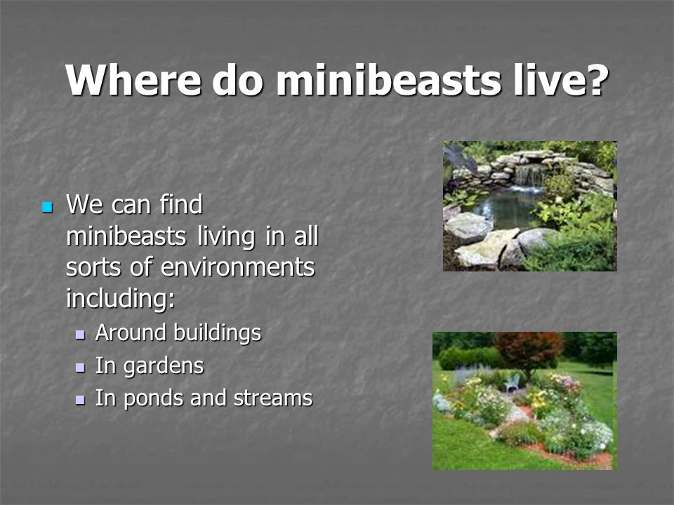Where do minibeasts live? We can find minibeasts living in all sorts of environments including: We can find minibeasts living in all sorts of environm