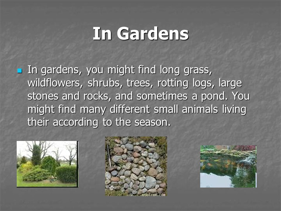 In Gardens In gardens, you might find long grass, wildflowers, shrubs, trees, rotting logs, large stones and rocks, and sometimes a pond. You might fi