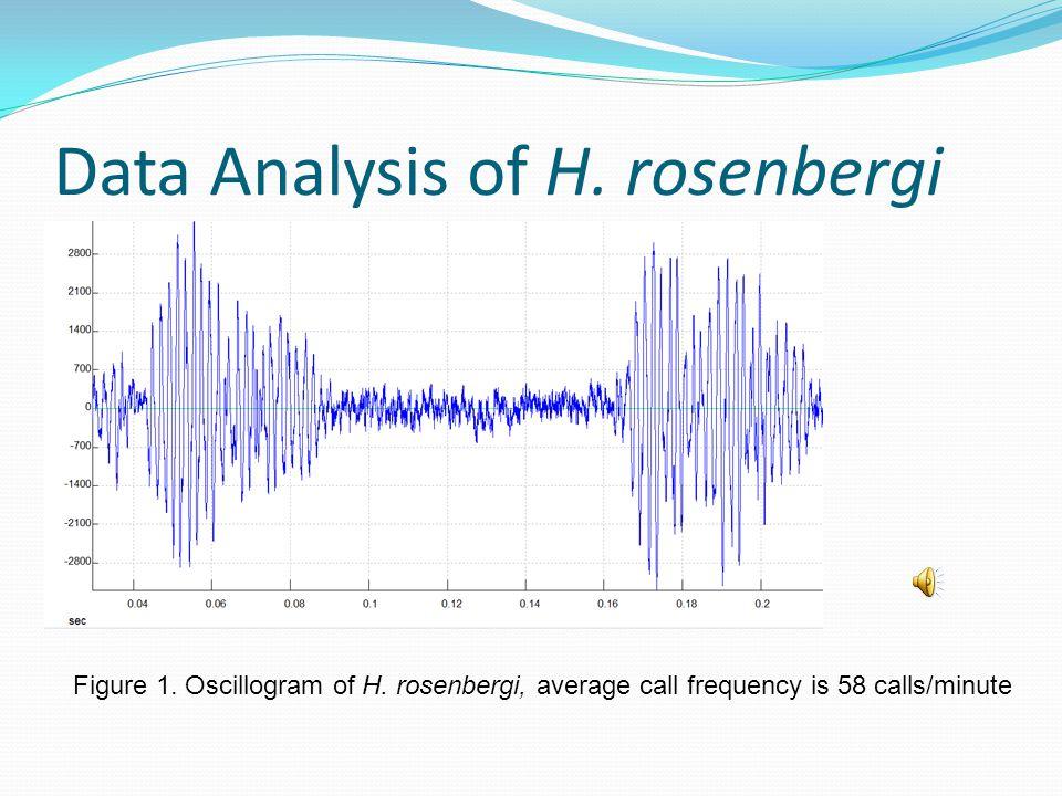 Data Analysis of H. rosenbergi Figure 1. Oscillogram of H.