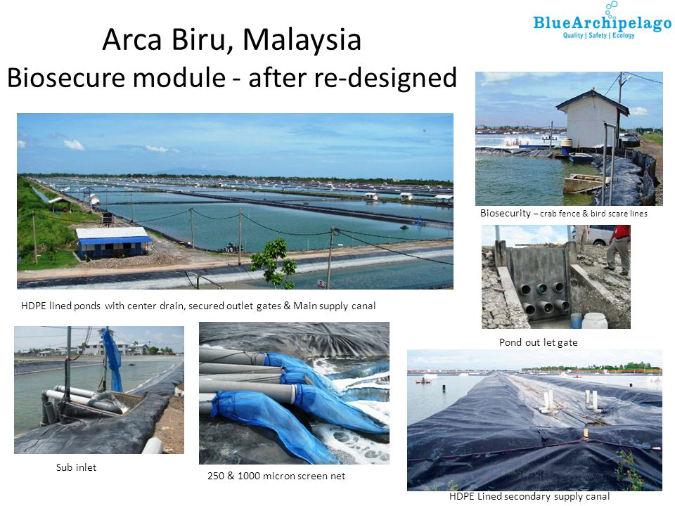 Arca Biru, Malaysia Biosecure module - after re-designed 250 & 1000 micron screen net HDPE Lined secondary supply canal Biosecurity – crab fence & bir