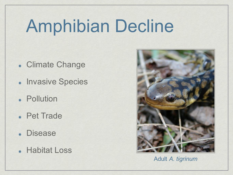 Amphibian Decline Climate Change Invasive Species Pollution Pet Trade Disease Habitat Loss Adult A.