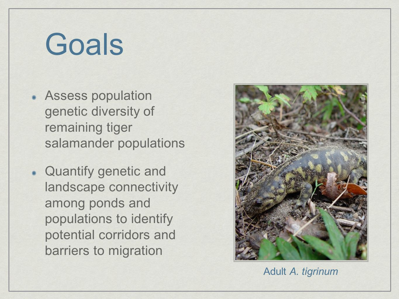 Goals Assess population genetic diversity of remaining tiger salamander populations Quantify genetic and landscape connectivity among ponds and popula