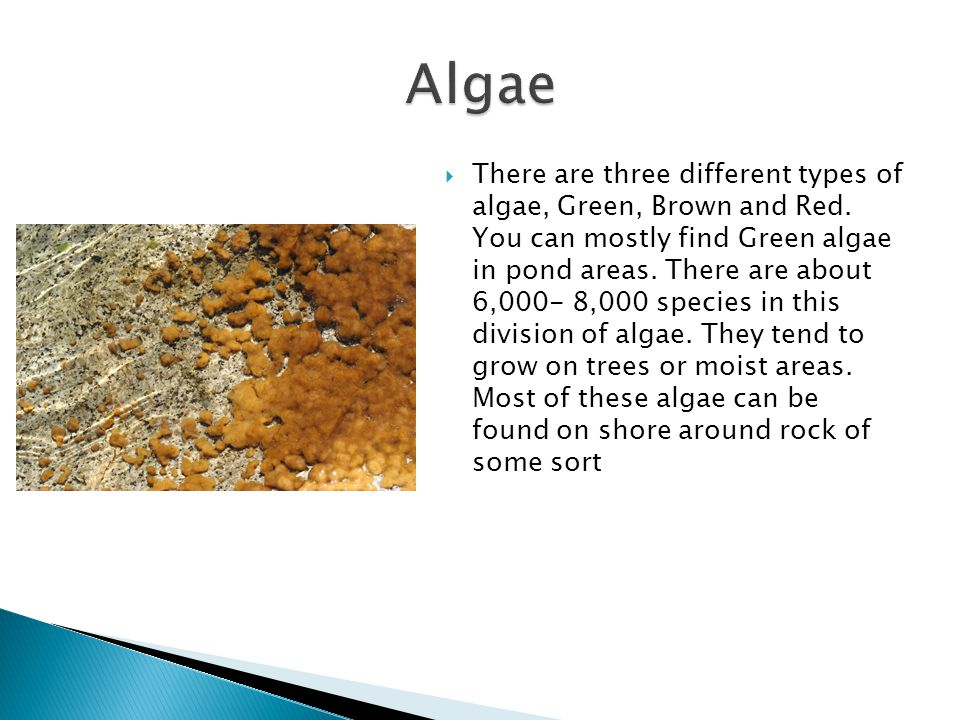  There are three different types of algae, Green, Brown and Red.