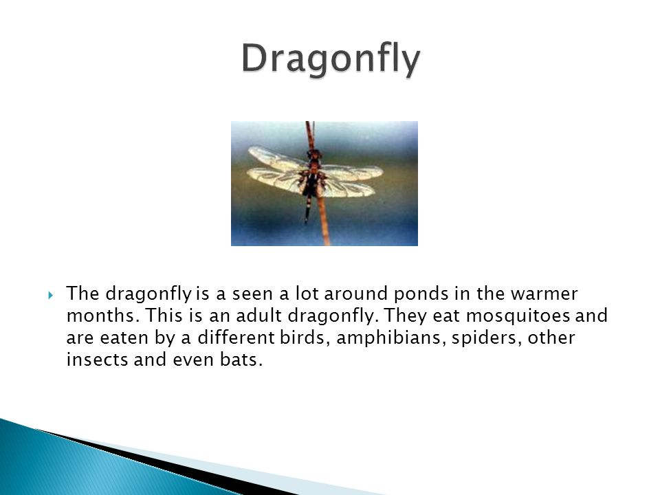  The dragonfly is a seen a lot around ponds in the warmer months.