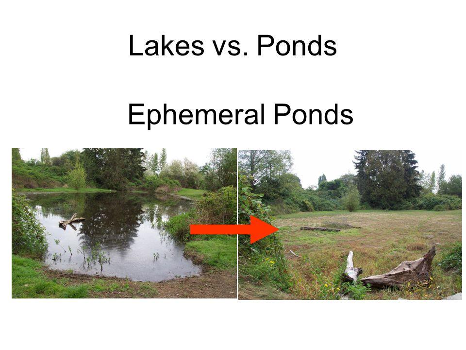 Ephemeral Ponds Lakes vs. Ponds