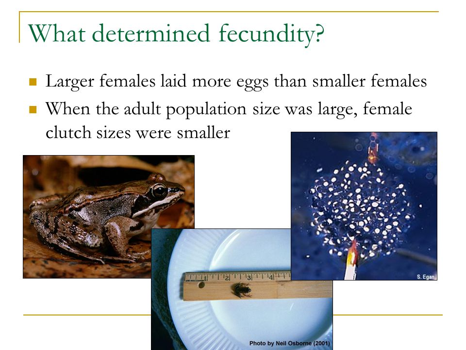 What determined fecundity.