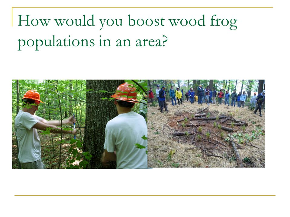 How would you boost wood frog populations in an area