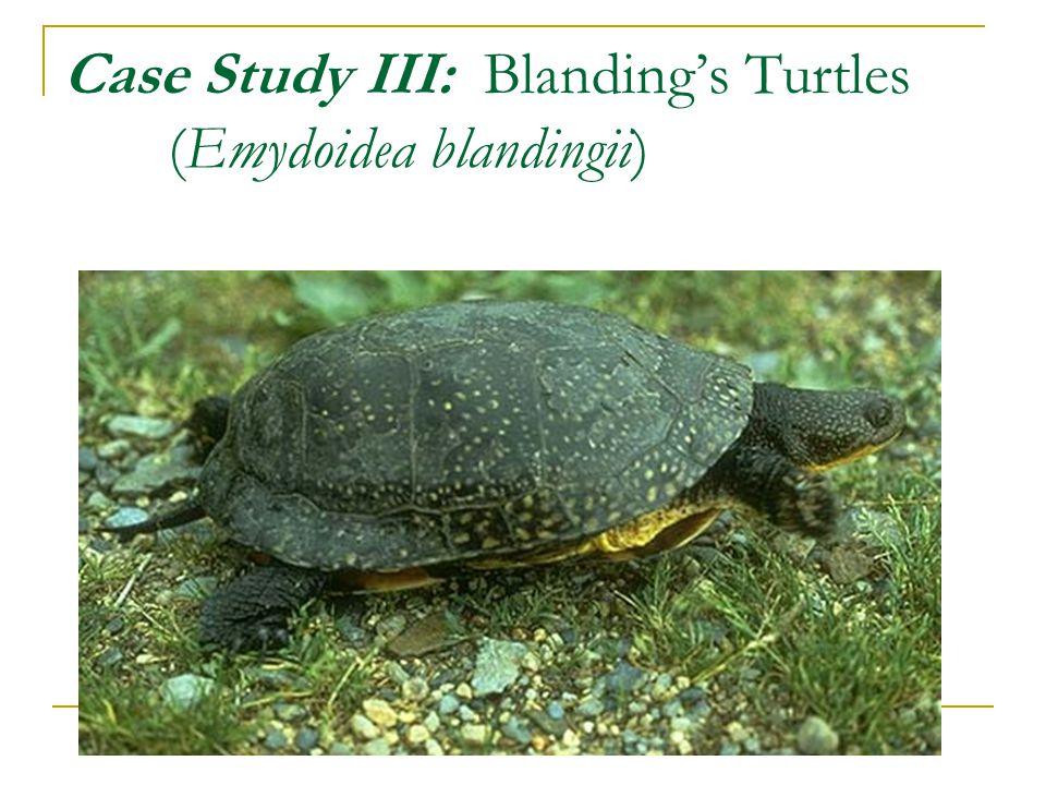 Case Study III: Blanding's Turtles (Emydoidea blandingii)