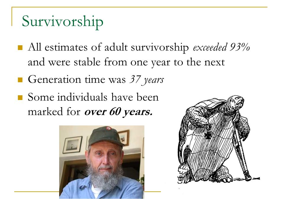 Survivorship All estimates of adult survivorship exceeded 93% and were stable from one year to the next Generation time was 37 years Some individuals have been marked for over 60 years.