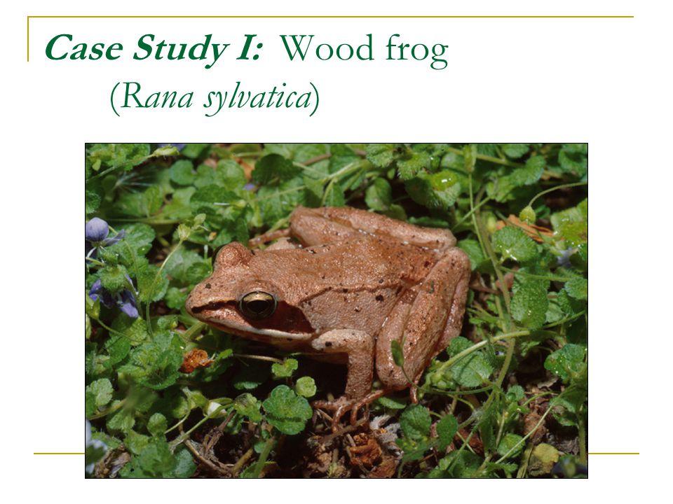 Life cycle of the wood frog Egg LarvaeMetamorph JuvenileAdult