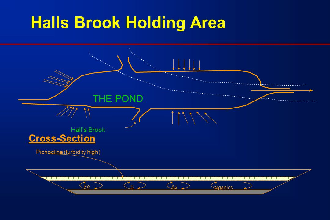 THE POND Hall's Brook S As Fe organics Picnocline (turbidity high) Halls Brook Holding Area Cross-Section