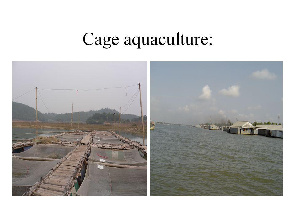 Cage aquaculture: