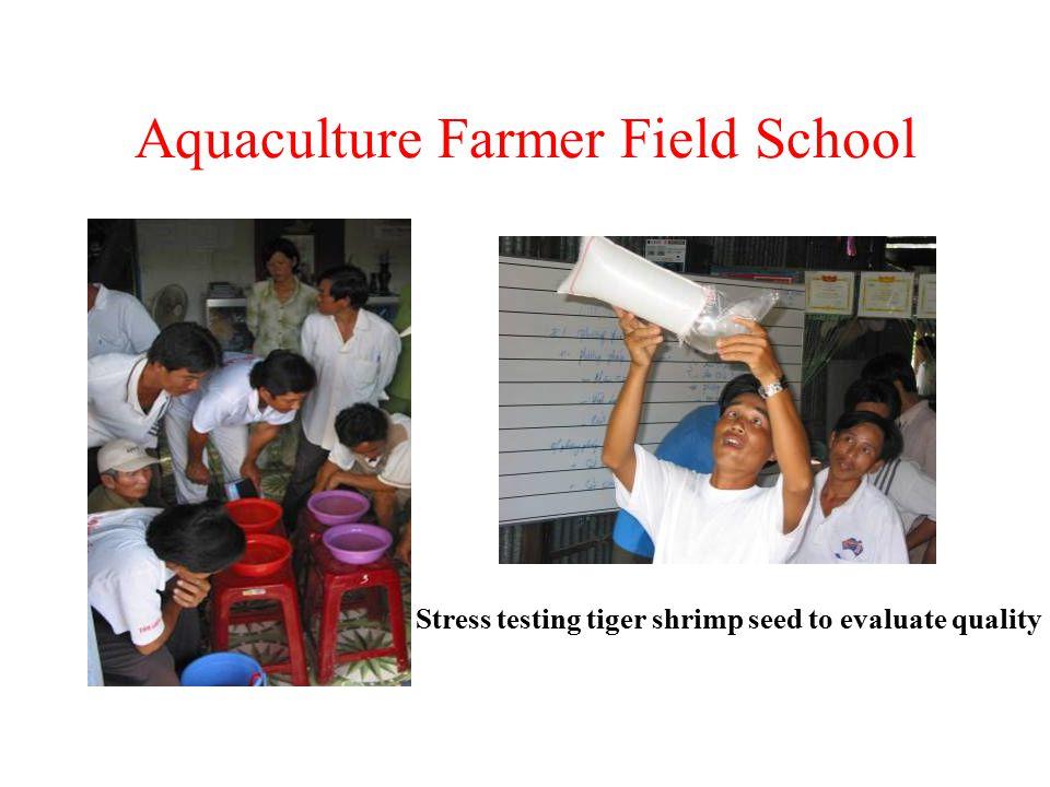 Aquaculture Farmer Field School Stress testing tiger shrimp seed to evaluate quality