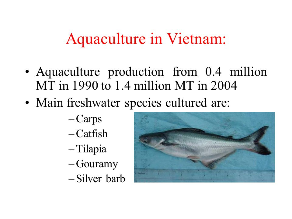 Aquaculture in Vietnam: Aquaculture production from 0.4 million MT in 1990 to 1.4 million MT in 2004 Main freshwater species cultured are: –Carps –Cat