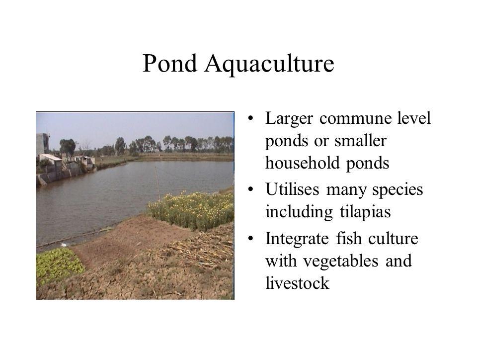 Pond Aquaculture Larger commune level ponds or smaller household ponds Utilises many species including tilapias Integrate fish culture with vegetables