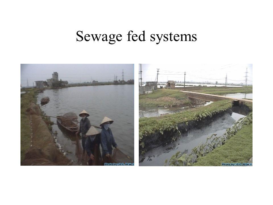 Sewage fed systems