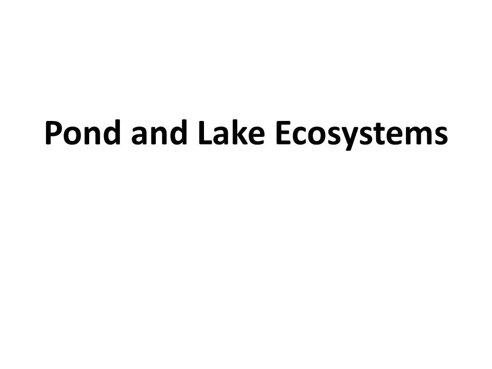 Pond and Lake Ecosystems