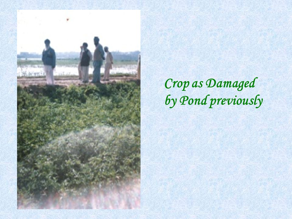 Crop as Damaged by Pond previously