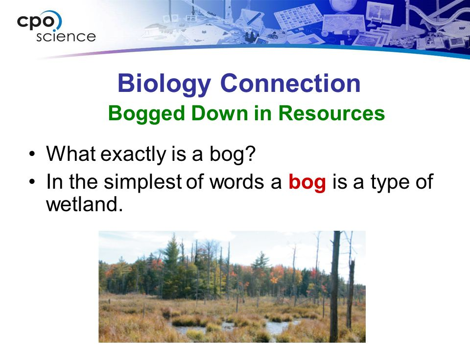 Biology Connection What exactly is a bog.In the simplest of words a bog is a type of wetland.