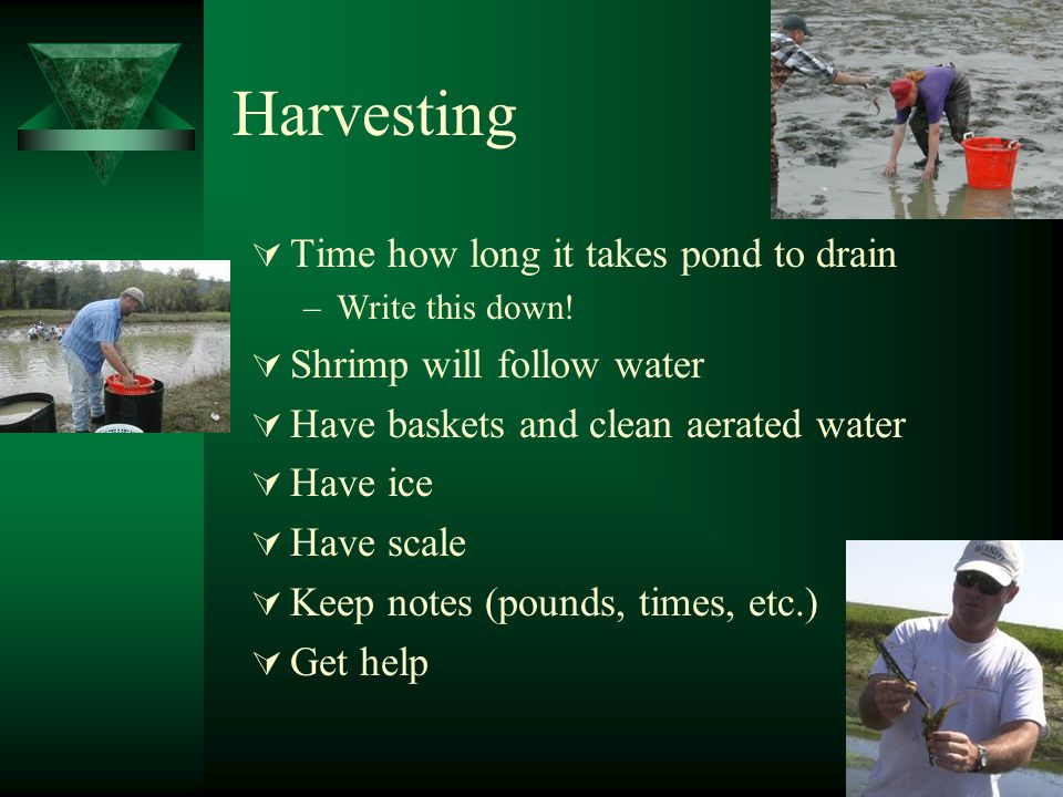 Harvesting  Time how long it takes pond to drain –Write this down.