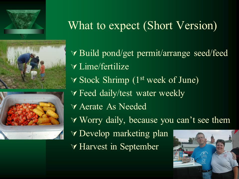 What to expect (Short Version)  Build pond/get permit/arrange seed/feed  Lime/fertilize  Stock Shrimp (1 st week of June)  Feed daily/test water weekly  Aerate As Needed  Worry daily, because you can't see them  Develop marketing plan  Harvest in September