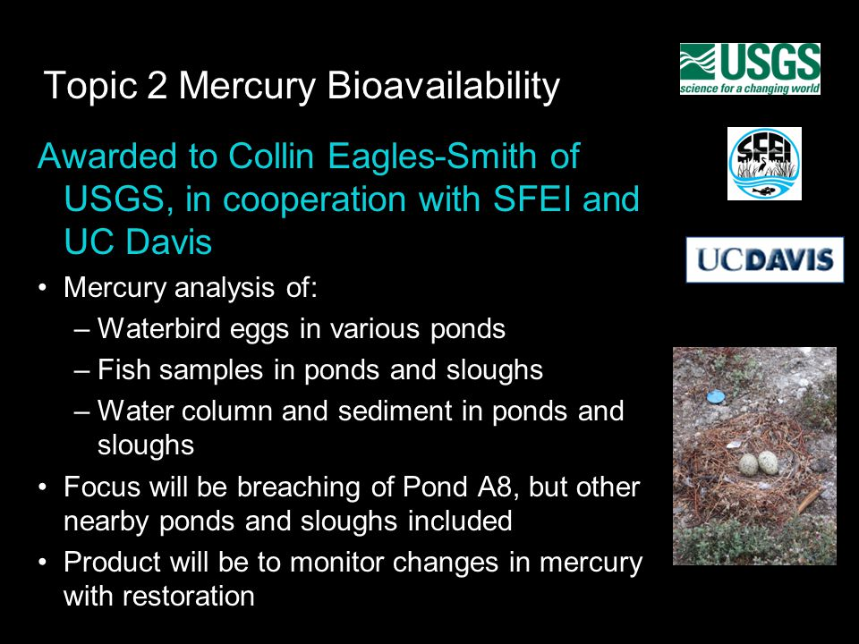 Topic 2 Mercury Bioavailability Awarded to Collin Eagles-Smith of USGS, in cooperation with SFEI and UC Davis Mercury analysis of: –Waterbird eggs in various ponds –Fish samples in ponds and sloughs –Water column and sediment in ponds and sloughs Focus will be breaching of Pond A8, but other nearby ponds and sloughs included Product will be to monitor changes in mercury with restoration