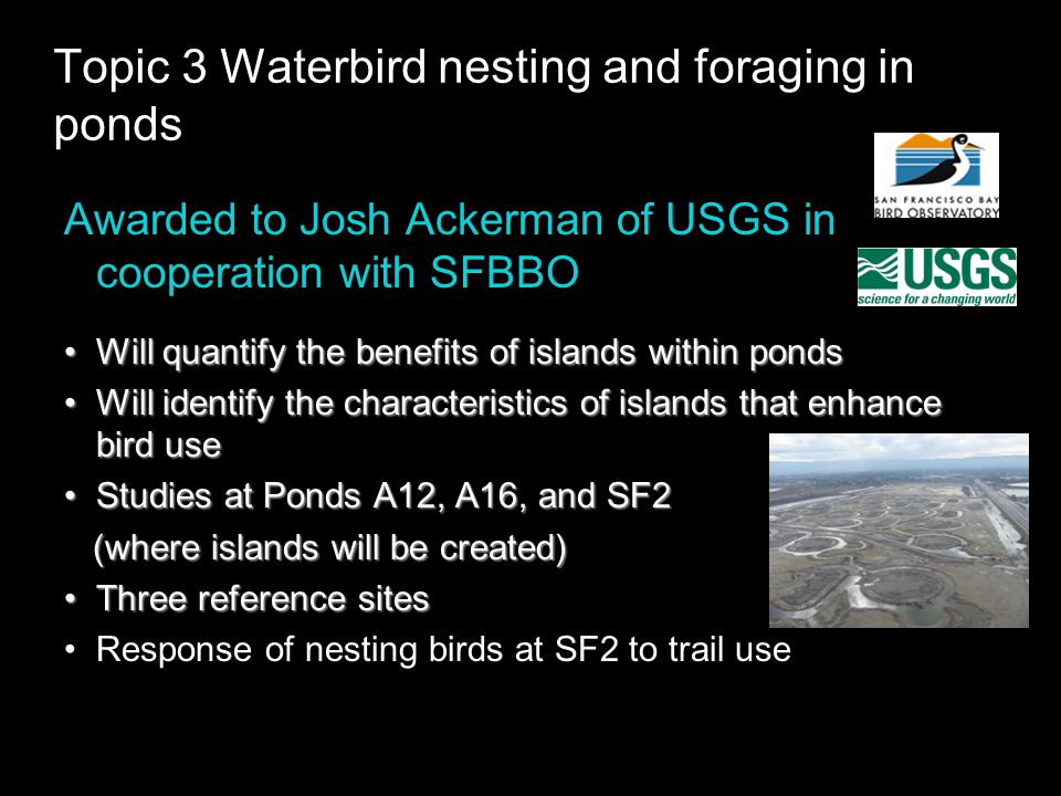 Topic 3 Waterbird nesting and foraging in ponds Awarded to Josh Ackerman of USGS in cooperation with SFBBO Will quantify the benefits of islands within pondsWill quantify the benefits of islands within ponds Will identify the characteristics of islands that enhance bird useWill identify the characteristics of islands that enhance bird use Studies at Ponds A12, A16, and SF2Studies at Ponds A12, A16, and SF2 (where islands will be created) (where islands will be created) Three reference sitesThree reference sites Response of nesting birds at SF2 to trail use