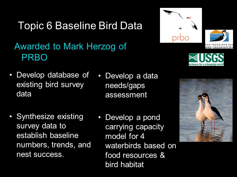Topic 6 Baseline Bird Data Develop database of existing bird survey data Synthesize existing survey data to establish baseline numbers, trends, and nest success.