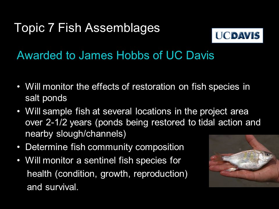 Topic 7 Fish Assemblages Awarded to James Hobbs of UC Davis Will monitor the effects of restoration on fish species in salt ponds Will sample fish at several locations in the project area over 2-1/2 years (ponds being restored to tidal action and nearby slough/channels) Determine fish community composition Will monitor a sentinel fish species for health (condition, growth, reproduction) and survival.