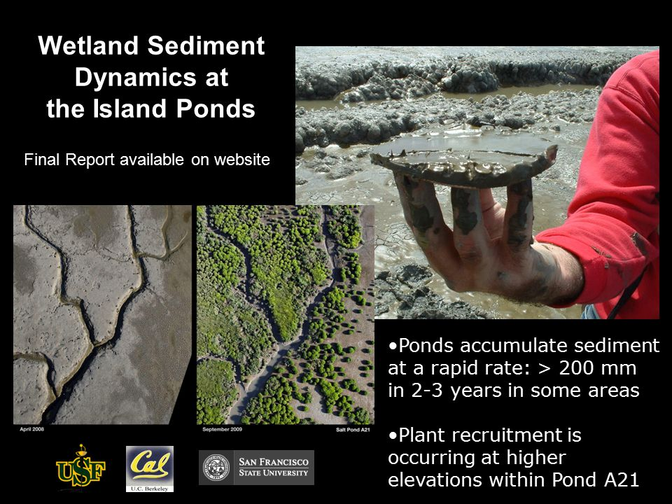Wetland Sediment Dynamics at the Island Ponds Ponds accumulate sediment at a rapid rate: > 200 mm in 2-3 years in some areas Plant recruitment is occurring at higher elevations within Pond A21 Final Report available on website